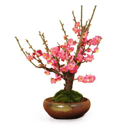 盆栽 紅梅
