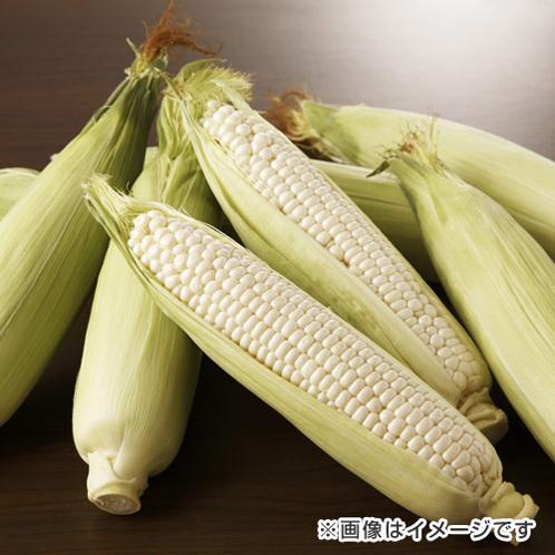 ショップオススメフルーツ&ベジタブル 愛知県産白いとうもろこ …¥3240の在庫を確認する